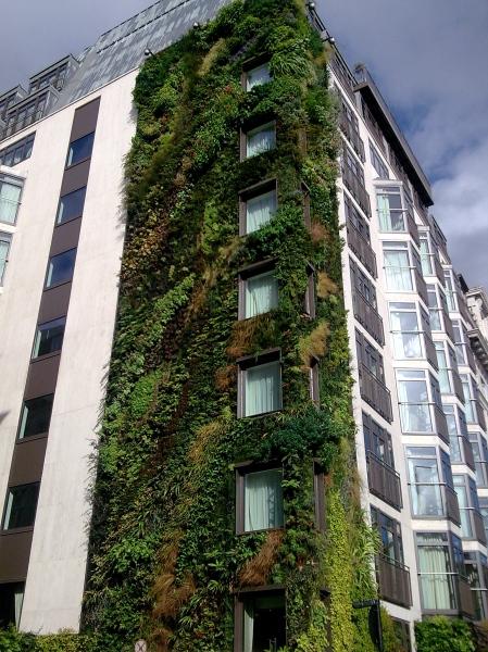 green wall athenaeum hotel green park london. Black Bedroom Furniture Sets. Home Design Ideas