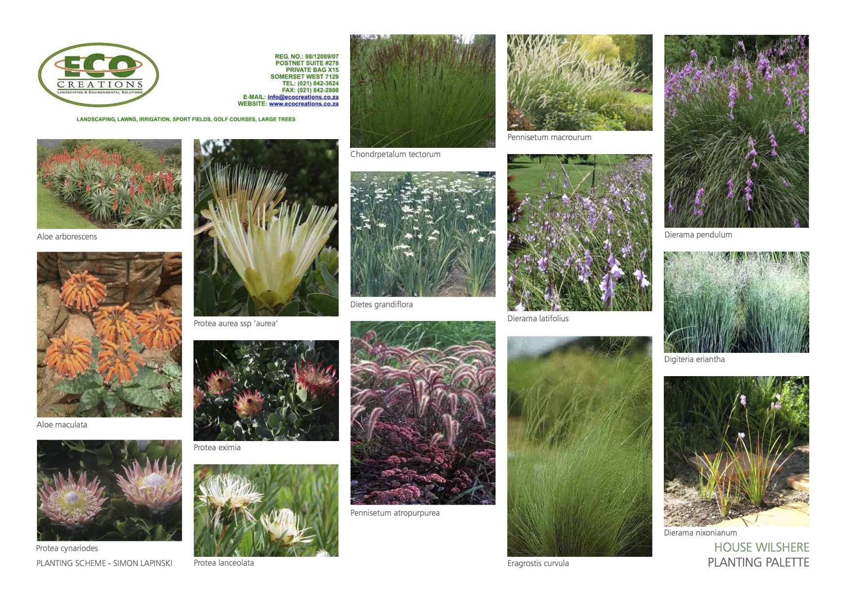 South african indigenous grasses landscapeislapinski for Planting plans with grasses