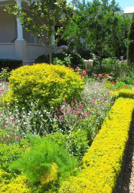 Vibrant mixed borders of Aliki Starke's home garden