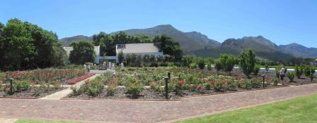 Panoramic of Rose Garden